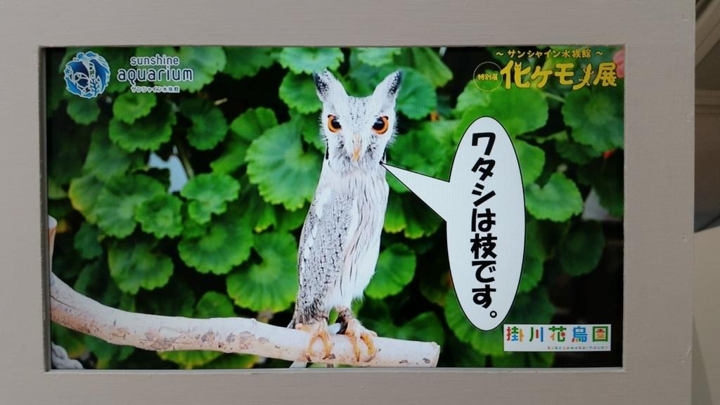 f:id:hitomishiriman:20180629001535j:plain