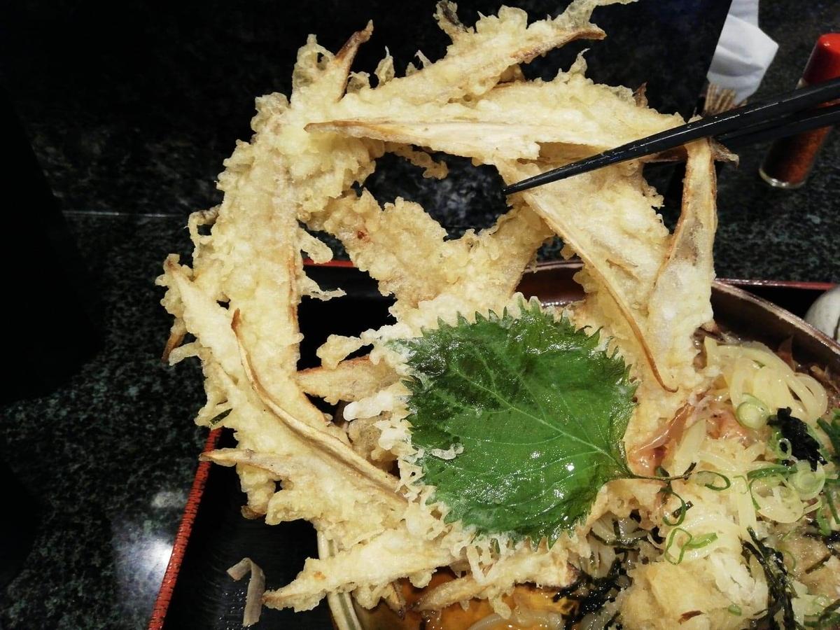 高田馬場『大地のうどん』のごぼうおろしぶっかけのごぼう天ぷらを、箸で持ち上げている写真